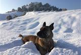 Первая в Греции собака-детектив спасает жизни других животных