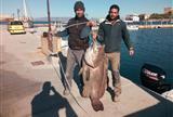 Греческий рыбак поймал на удочку чудо-рыбу