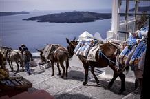 Каким туристам в Греции запретят ездить на ослах