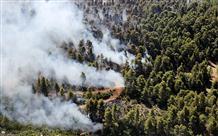 Пожарные третьи сутки не могут справиться с огнем на острове Эвбея (фото)
