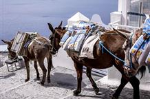 В Греции тяжелым туристам грозит штраф за катание на ослах