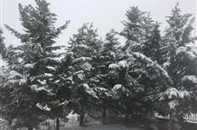 Грецию завалило снегом (фото, видео)