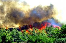 На острове Родос начались сильные лесные пожары
